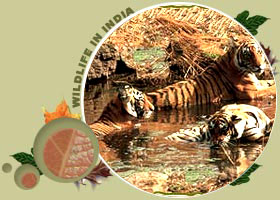 Bandavgarh National Park