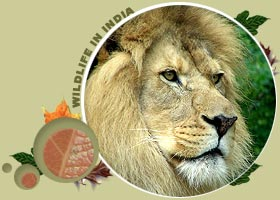 Gir Wildlife Sanctuary,Gir National Park,Gir Forest,Gir Lion Sanctuary