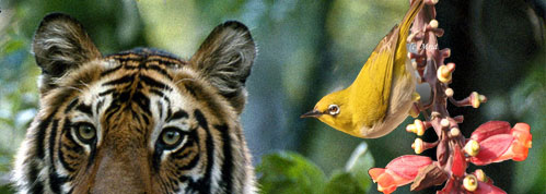 wildlife safari tours india