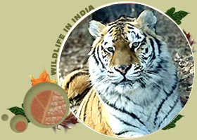 Sariska Wildlife Tour Package