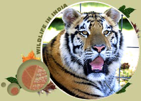 tiger tour packages india