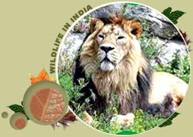 West India Wildlife Tour